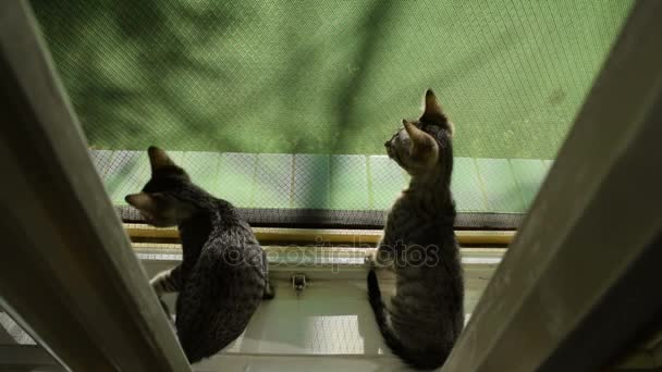 Cica az ablakon, félek, de a feltárása