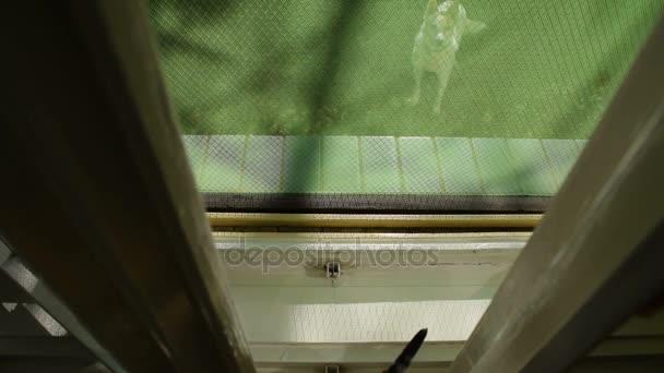 Kitty az ablak elrejtése a kutya