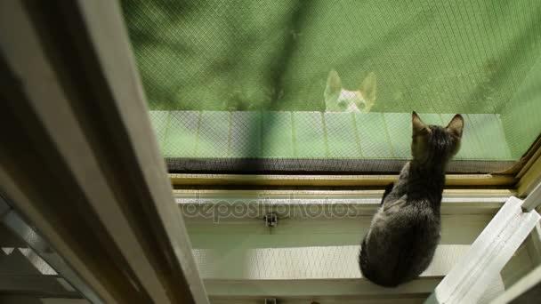 kutya köszönni a cica, az ablakon ugrott