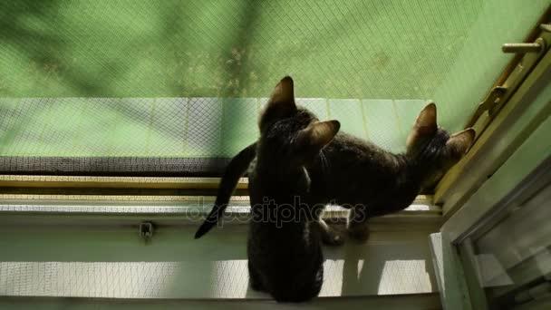 cica, Fedezze fel a világot egy megnyitott ablak