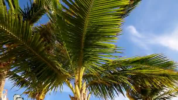 palm leaves in the wind