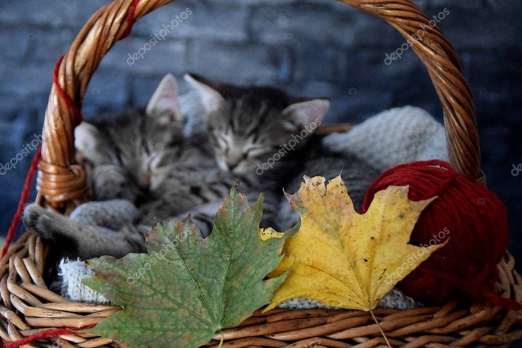 two kittens sleeping in a wicker basket with leaves and red ball of strin