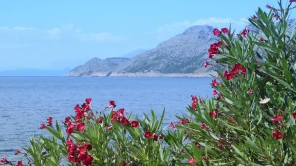 kvetoucí oleandry, moře a hory v pozadí