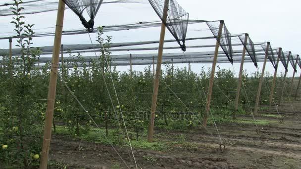 Mix 2 výstřely, jabloňový sad vztahuje krupobití sítí, sběr jablek a jablek v bednách