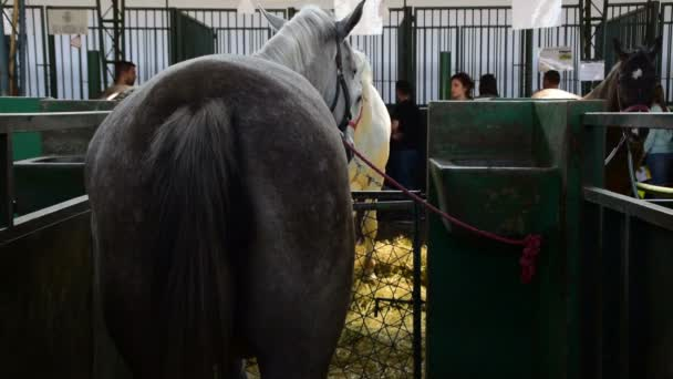Horses standing opposite each other in a stall