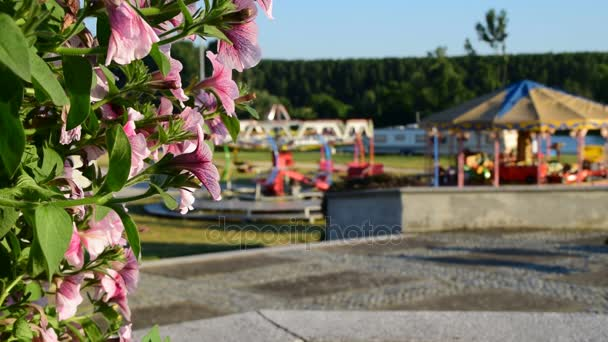 Colorful pink petunias in pot near the luna park