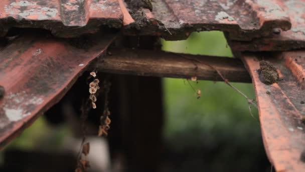 2 v 1, střecha je zničen po bouře, hurikán
