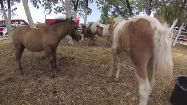 Bauernhof mit braunen und weißen Ponys