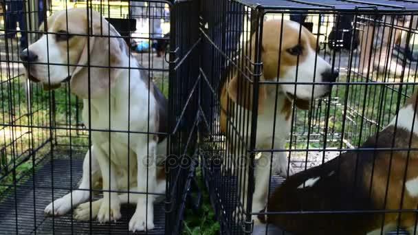 norníci a honicí psy v kleci
