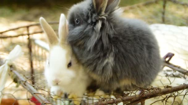 3 in 1 Two fluffy rabbits