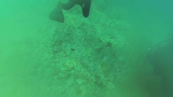 Two scuba divers swimming underwater and one red starfish