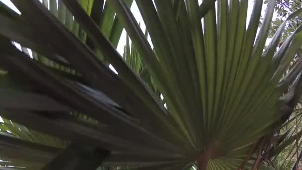 palmy v tropech