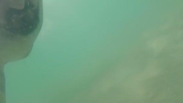 Man diving in sea or ocean underwater view