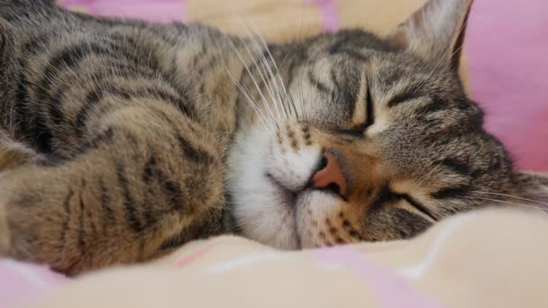 Close up of a cat sleeping on a bed.