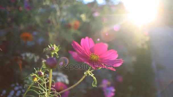 Beautiful nature scene of garden flowers trembling on the wind
