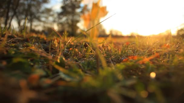 Žluté listy padají na zelené trávě venku při západu slunce
