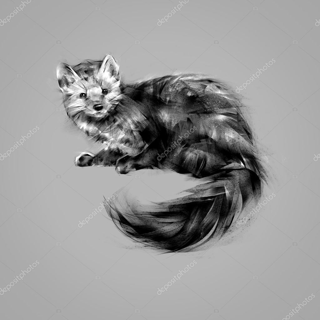 Belette animal noir et blanc dessin photographie khius - Dessin de belette ...