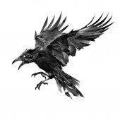 nakreslena letícího ptáka na bílém pozadí boční pohled