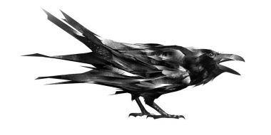 sketch of a crow sitting on white background