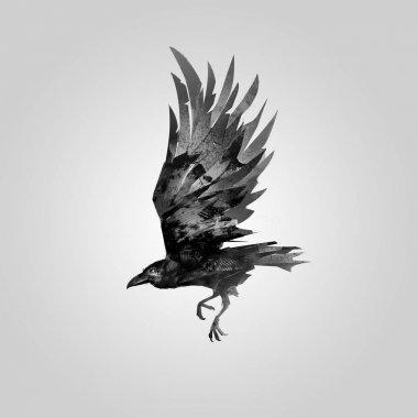 drawn flying bird Raven