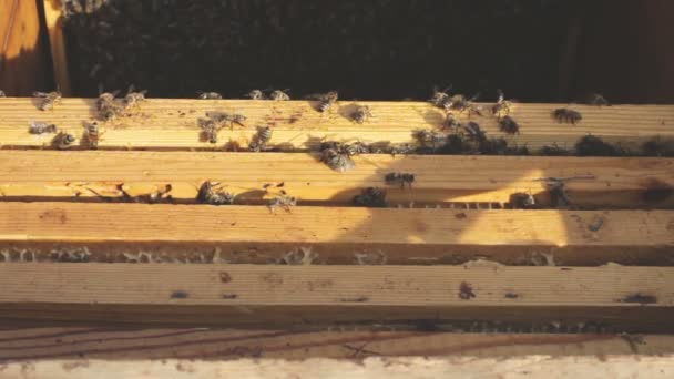 Bees are swarming around a hive