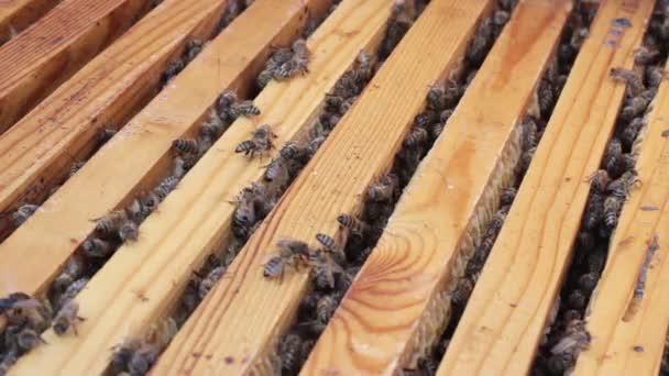 Méhek a nyüzsgő körül egy kaptár