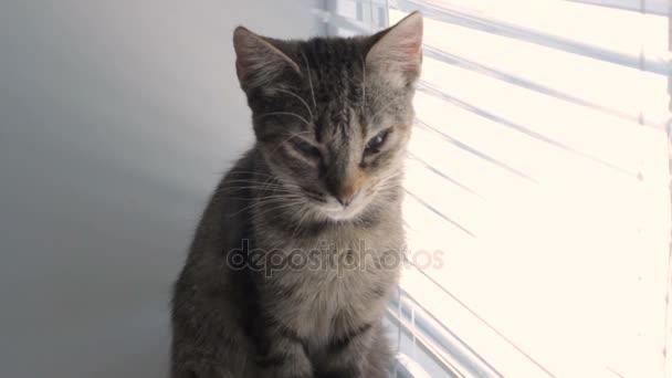 Aranyos vicces macska otthon, kedvtelésből tartott, beltéri