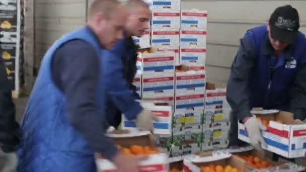 Workers move boxes of oranges on loader