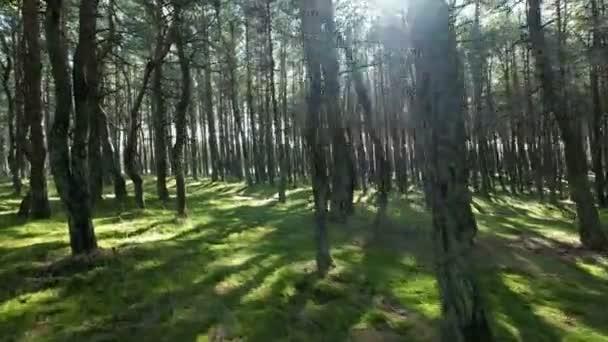 Zelený les a slunce na vrcholcích stromů, žádní lidé