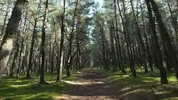 Sunny zelený les a silnice mezi vysoké stromy