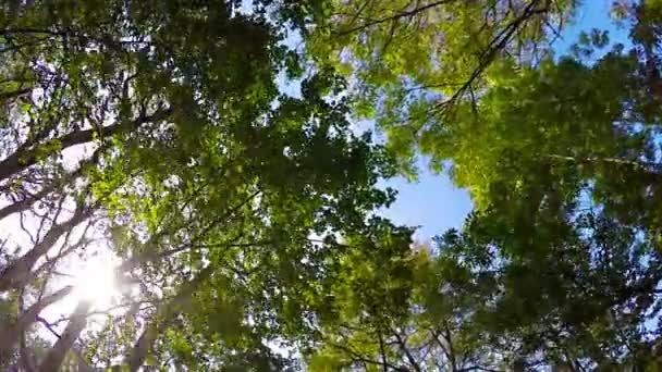Bottom view to green trees