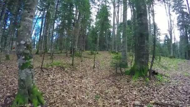 Podzimní les spadaného listí