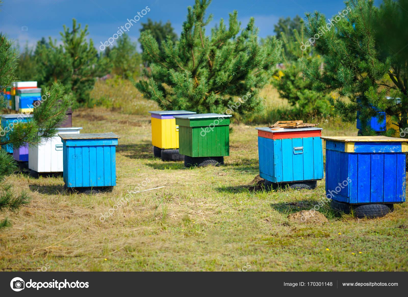 Wiersz Bee Kolorowe Uli Lesie Zdjęcie Stockowe Fotosaga