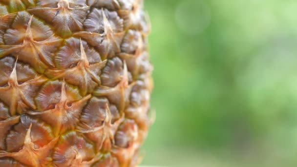 Closeup ripe wet pineapple on a natural green background. 360 rotation. Delicious tropical fruits. Summer food concept. 4K UHD