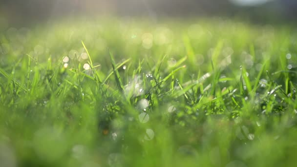 Close-up of a beautiful spring lawn, grass covered with water droplets. Soft focus. Nature background