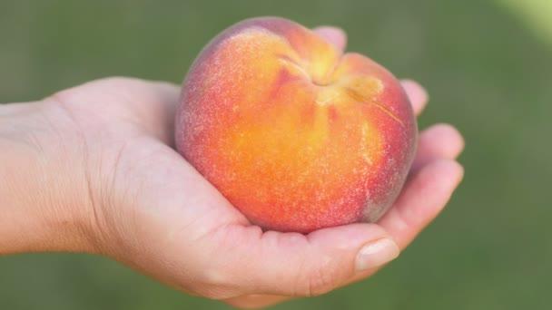 A kéz egy érett lédús őszibarackot tart természetes zöld háttéren. Finom lédús gyümölcsök. Étrend