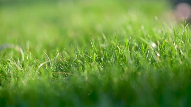 Detailní čerstvé šťavnaté jarní trávy. Zelené pozadí.