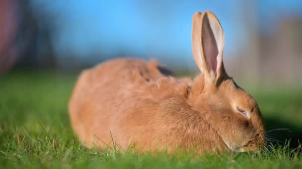 Close-up of a beautiful rabbit sitting on the lawn. rabbit on green grass