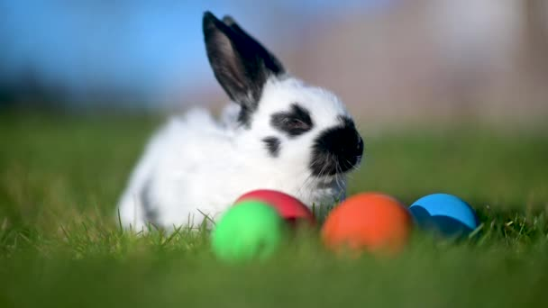 A cute Easter bunny is sitting in the grass importing colorful Easter eggs. Happy easter.