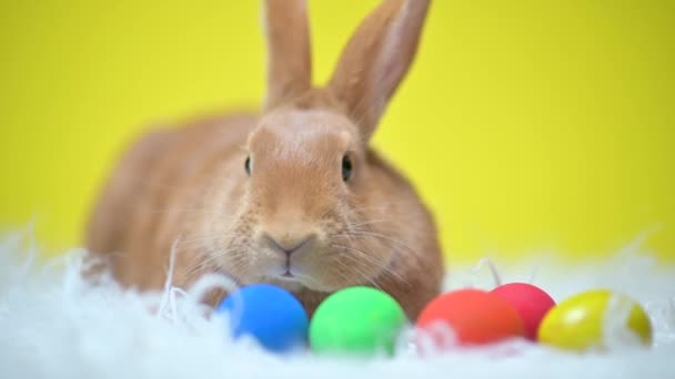 Lustige süße Osterhasen sitzen auf einem Bett aus bunten Ostereiern, auf gelbem Studiohintergrund. Frohe Ostern.