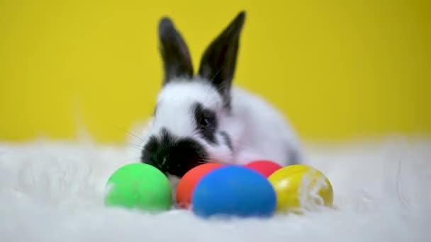 Vtipné roztomilé velikonoční zajíček sedí na posteli barevných velikonočních vajíček, na žlutém pozadí studia. Veselé Velikonoce.