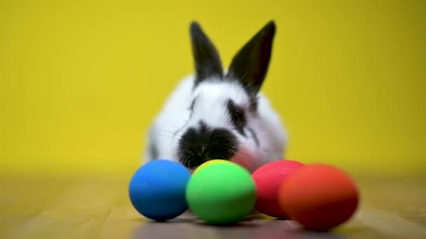Vicces aranyos aranyos húsvéti nyuszi ül egy ágy színes húsvéti tojás, egy sárga stúdió háttér. Boldog húsvétot!.