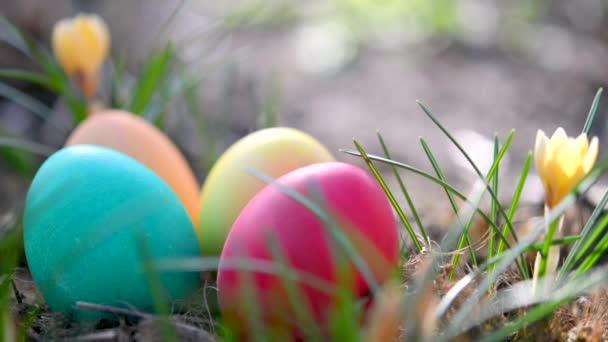 Közelkép Színes húsvéti tojások a kertben, gyönyörű virágzó tavaszi virágok közelében. Húsvéti tojás vadászat a kertben Húsvét koncepció háttér.