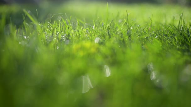 Nahaufnahme frisches Gras, das mit Tautropfen bedeckt ist. Sommerlicher Hintergrund