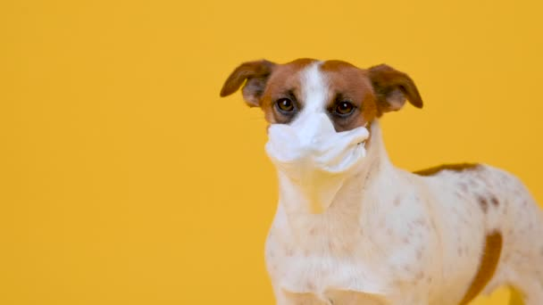 Cute dog in a medical mask on his face on a yellow background. antivirus concept