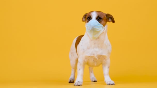 Roztomilý pes v lékařské masce na obličeji na žlutém pozadí. antivirový koncept