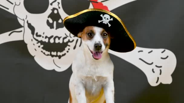 Portrait of a funny Jack Russell Terrier dog in a pirate hat on a pirate flag background. Pets. Background for your text and design.