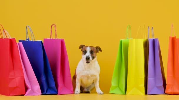 Funny pes plemeno Jack Russell teriér sedí vedle nákupních tašek na žlutém pozadí studia