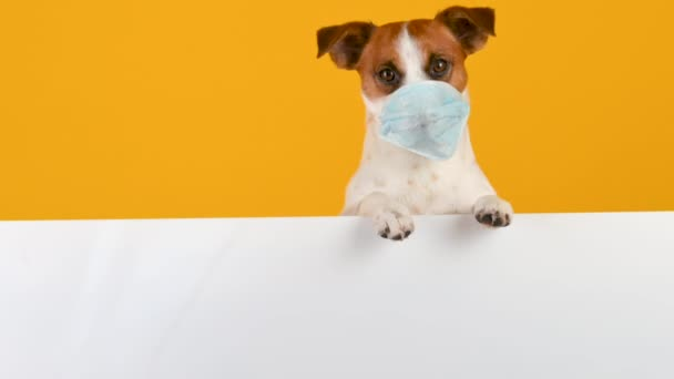Closeup portrait of a dog in a medical mask on his face rests his paws on a white background. Stay home and stay safe. antivirus concept.