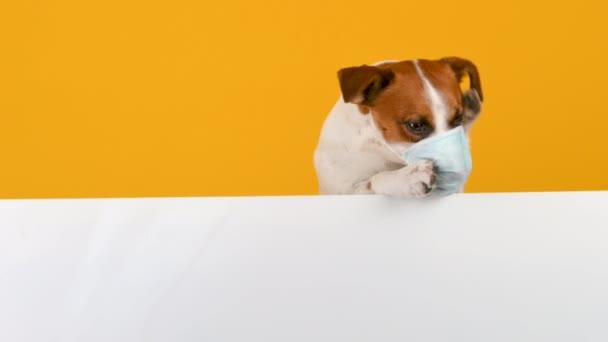 Das Porträt eines Hundes in Großaufnahme, der versucht, eine medizinische Maske aus seiner Schnauze zu entfernen. Bleiben Sie zu Hause und bleiben Sie sicher. Antivirus-Konzept. Platz für die Inschrift